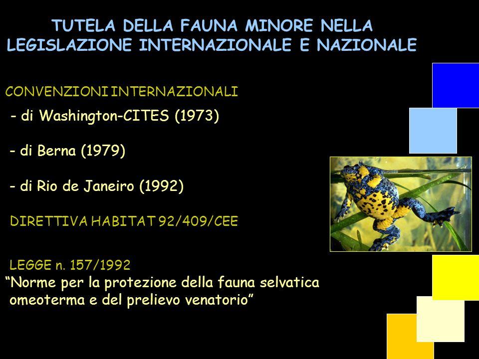 TUTELA DELLA FAUNA MINORE NELLA LEGISLAZIONE INTERNAZIONALE E NAZIONALE - di Washington-CITES (1973) - di Berna (1979) - di Rio de Janeiro (1992) DIRE