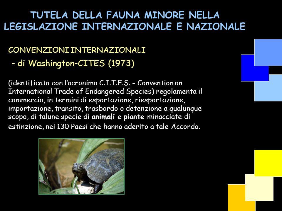 TUTELA DELLA FAUNA MINORE NELLA LEGISLAZIONE INTERNAZIONALE E NAZIONALE - Convenzione di Berna (1981) Per le specie di cui allAllegato II è da vietare: a) qualsiasi forma di cattura intenzionale, di detenzione e di uccisione intenzionale; b) il deterioramento o la distruzione intenzionali dei siti di riproduzione o di riposo; c) il molestare intenzionalmente la fauna selvatica, specie nel periodo della riproduzione, dell allevamento e dell ibernazione, nella misura in cui tali molestie siano significative in relazione agli scopi della presente convenzione; d) la distruzione o la raccolta intenzionali di uova dall ambiente naturale o la loro detenzione quand anche vuote; e) la detenzione ed il commercio interno di tali animali, vivi o morti, come pure imbalsamati, nonché di parti o prodotti facilmente identificabili ottenuti dall animale, nella misura in cui il provvedimento contribuisce a dare efficacia alle disposizioni del presente articolo.