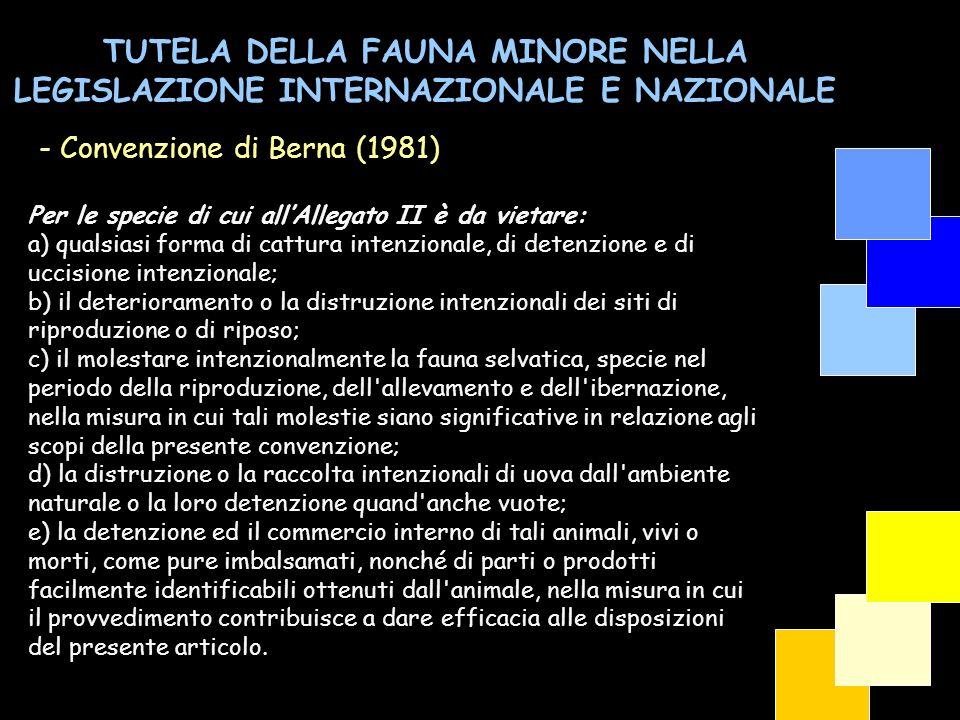 TUTELA DELLA FAUNA MINORE NELLA LEGISLAZIONE INTERNAZIONALE E NAZIONALE - Convenzione di Berna (1981) Per le specie di cui allAllegato II è da vietare