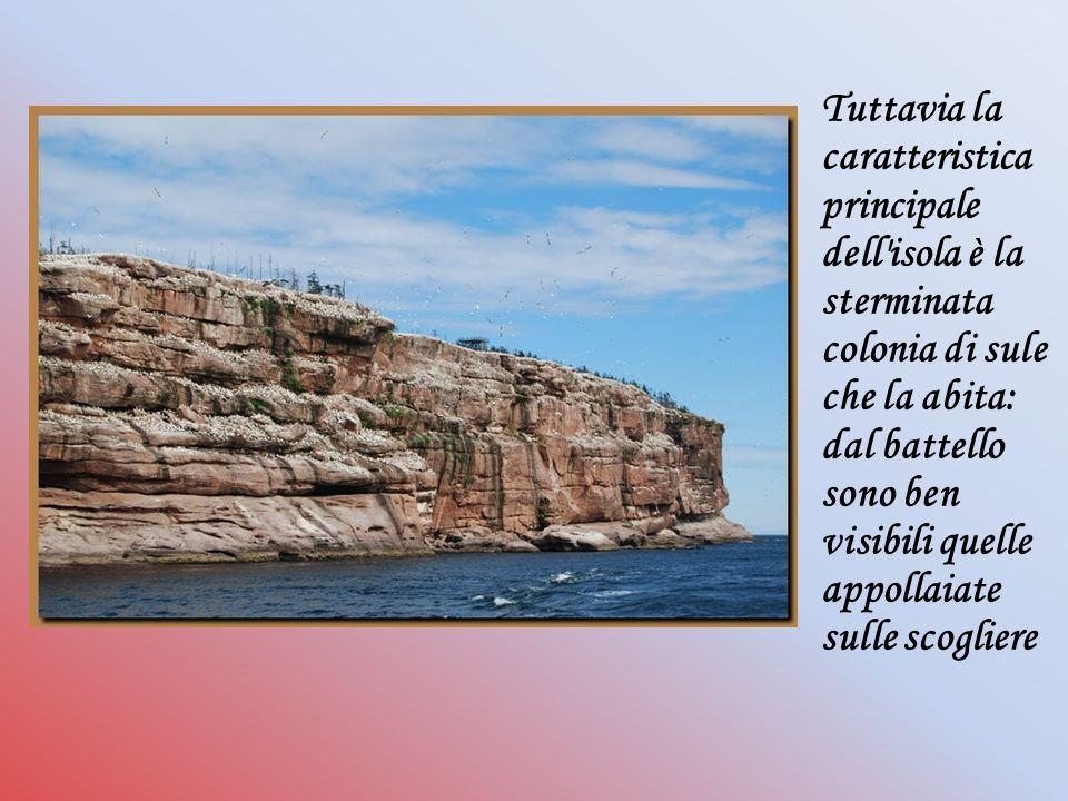 Tuttavia la caratteristica principale dell isola è la sterminata colonia di sule che la abita: dal battello sono ben visibili quelle appollaiate sulle scogliere