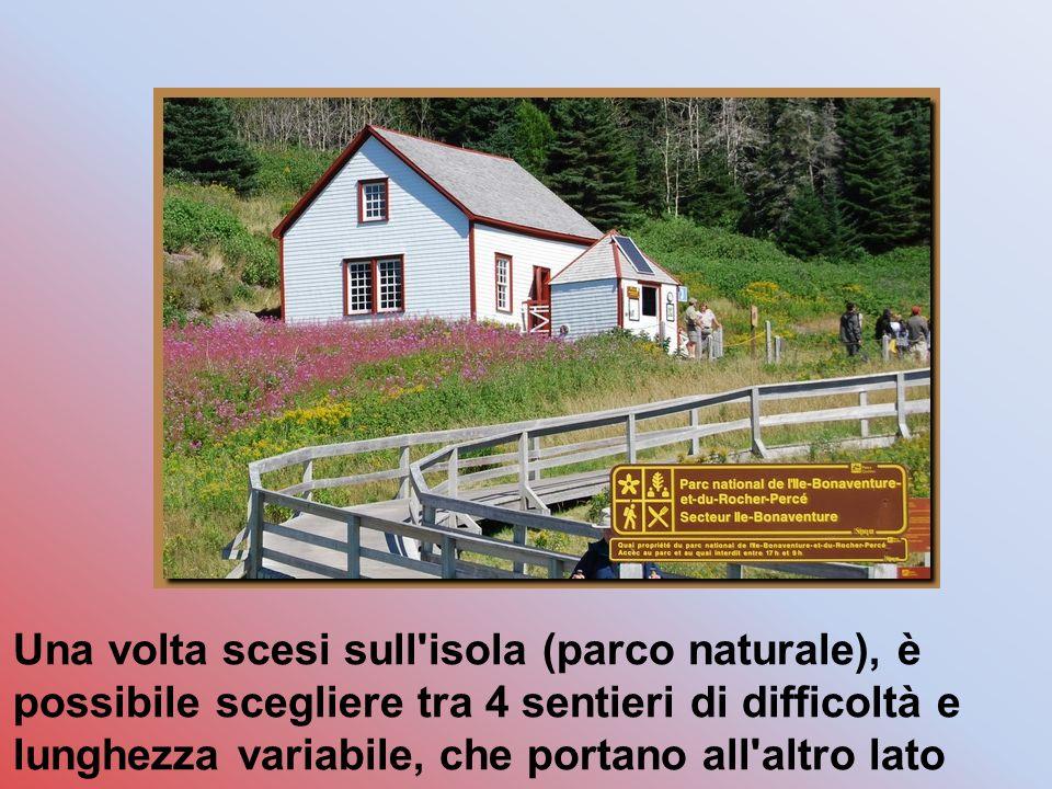 Una volta scesi sull isola (parco naturale), è possibile scegliere tra 4 sentieri di difficoltà e lunghezza variabile, che portano all altro lato dell isola dove si trova appunto la colonia.
