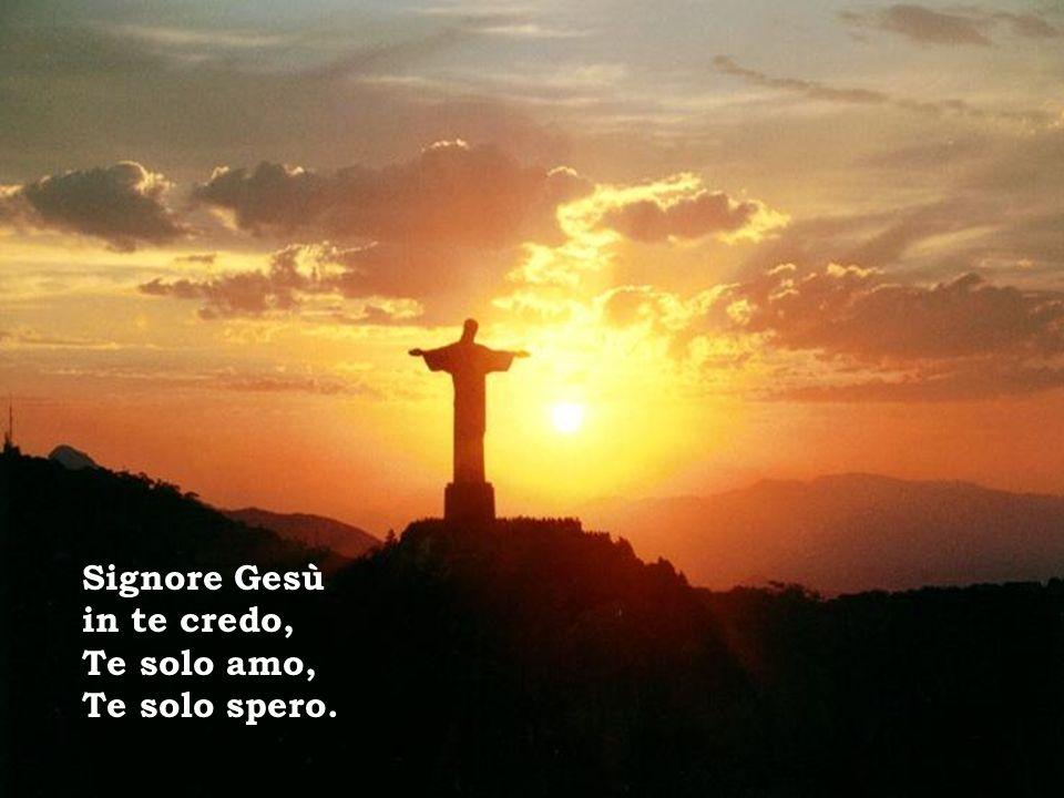 Signore Gesù in te credo, Te solo amo, Te solo spero.