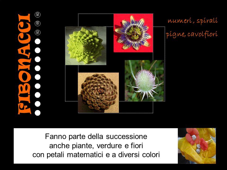 5 10 15 20 25 30 35 40 45 50 55 60 numeri, spirali pigne, cavolfiori Fanno parte della successione anche piante, verdure e fiori con petali matematici e a diversi colori FIBONACCI