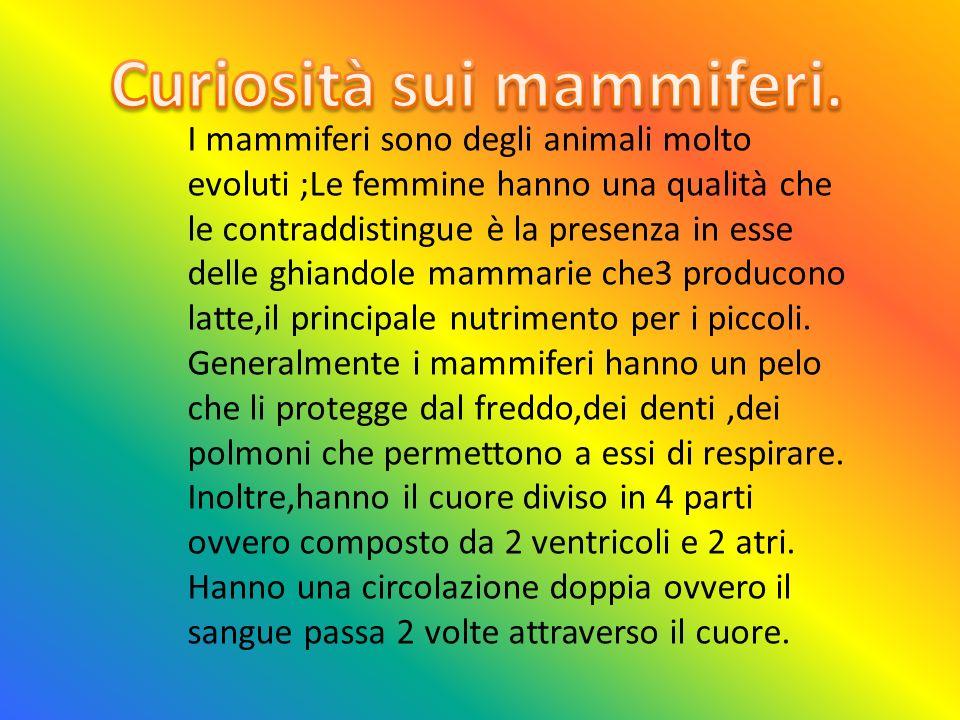 I mammiferi sono degli animali molto evoluti ;Le femmine hanno una qualità che le contraddistingue è la presenza in esse delle ghiandole mammarie che3 producono latte,il principale nutrimento per i piccoli.