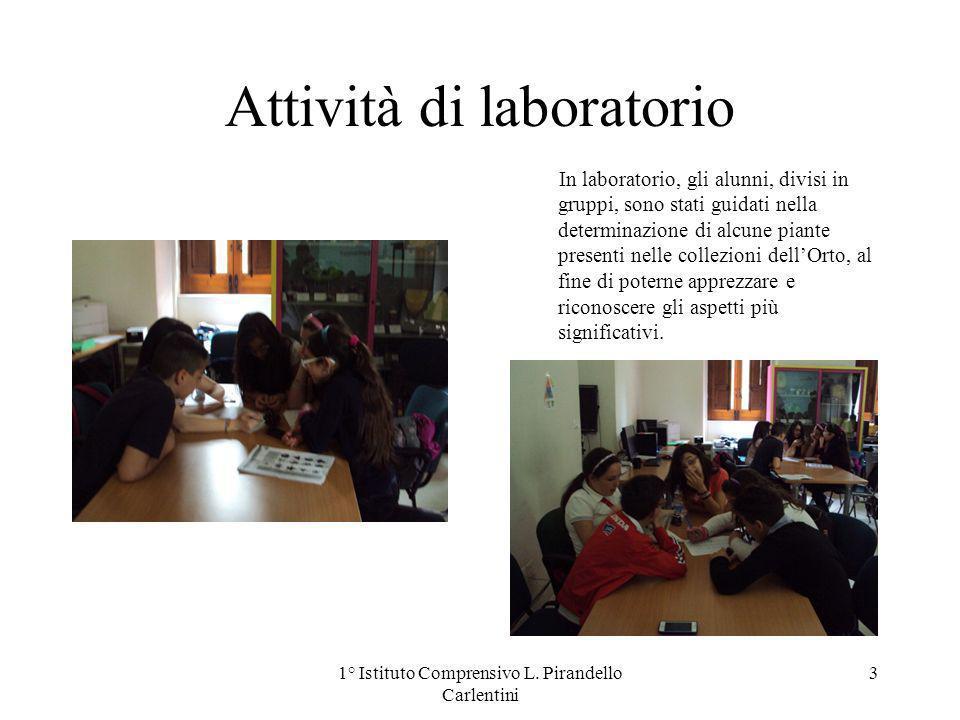 Attività di laboratorio In laboratorio, gli alunni, divisi in gruppi, sono stati guidati nella determinazione di alcune piante presenti nelle collezio