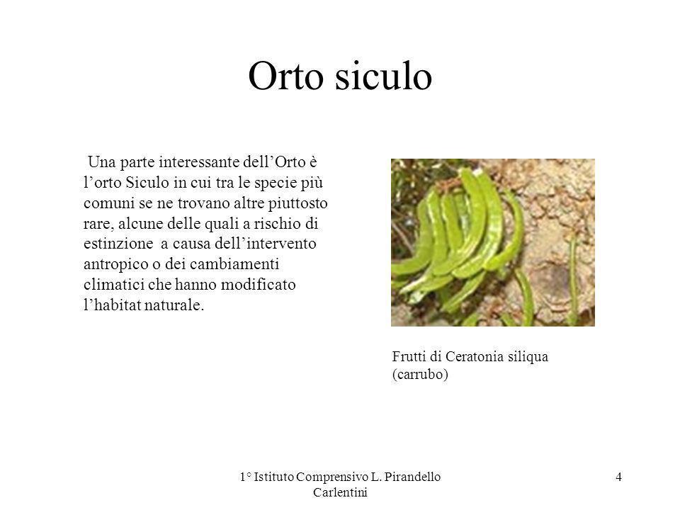 Orto siculo Una parte interessante dellOrto è lorto Siculo in cui tra le specie più comuni se ne trovano altre piuttosto rare, alcune delle quali a ri