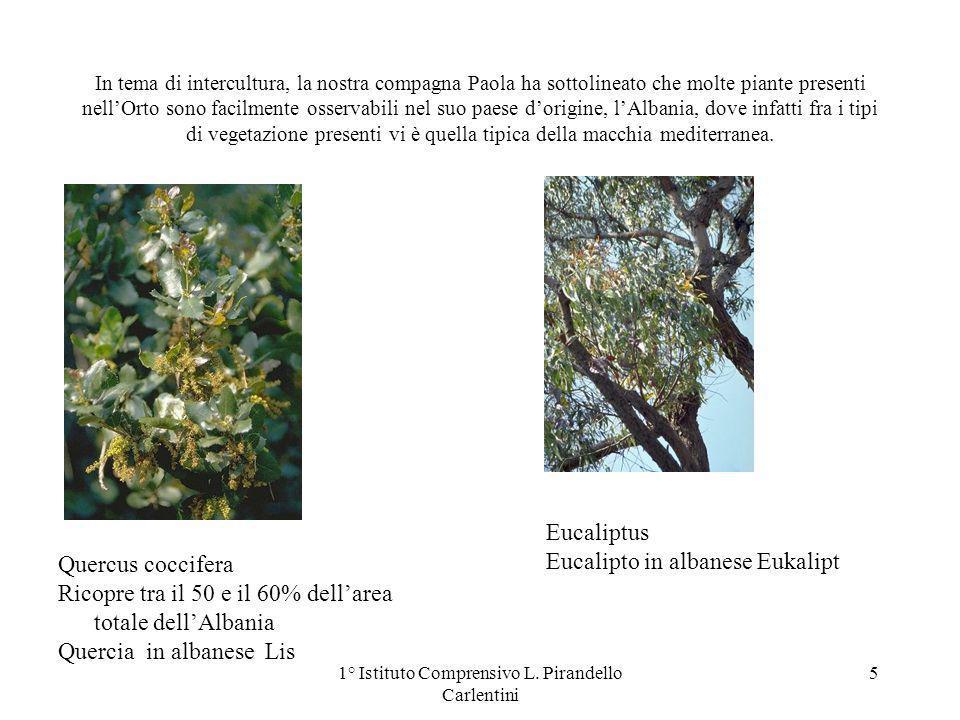 In tema di intercultura, la nostra compagna Paola ha sottolineato che molte piante presenti nellOrto sono facilmente osservabili nel suo paese dorigine, lAlbania, dove infatti fra i tipi di vegetazione presenti vi è quella tipica della macchia mediterranea.