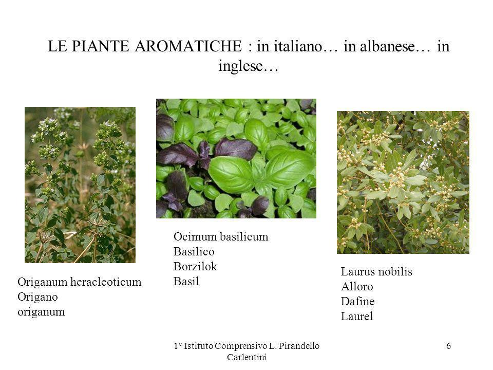 LE PIANTE AROMATICHE : in italiano… in albanese… in inglese… Origanum heracleoticum Origano origanum Ocimum basilicum Basilico Borzilok Basil Laurus n