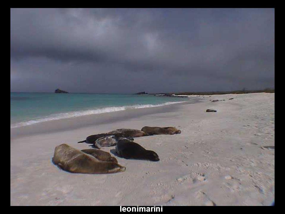 iguanamare