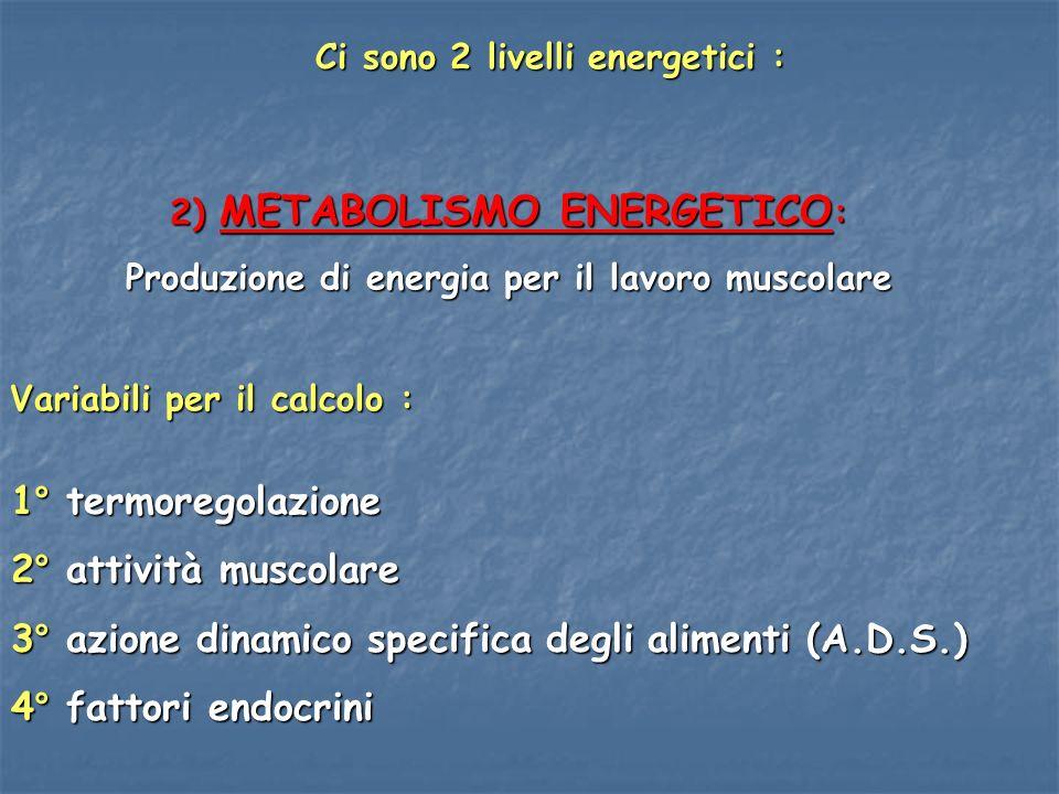 2) METABOLISMO ENERGETICO : Produzione di energia per il lavoro muscolare Variabili per il calcolo : Ci sono 2 livelli energetici : 1° termoregolazion