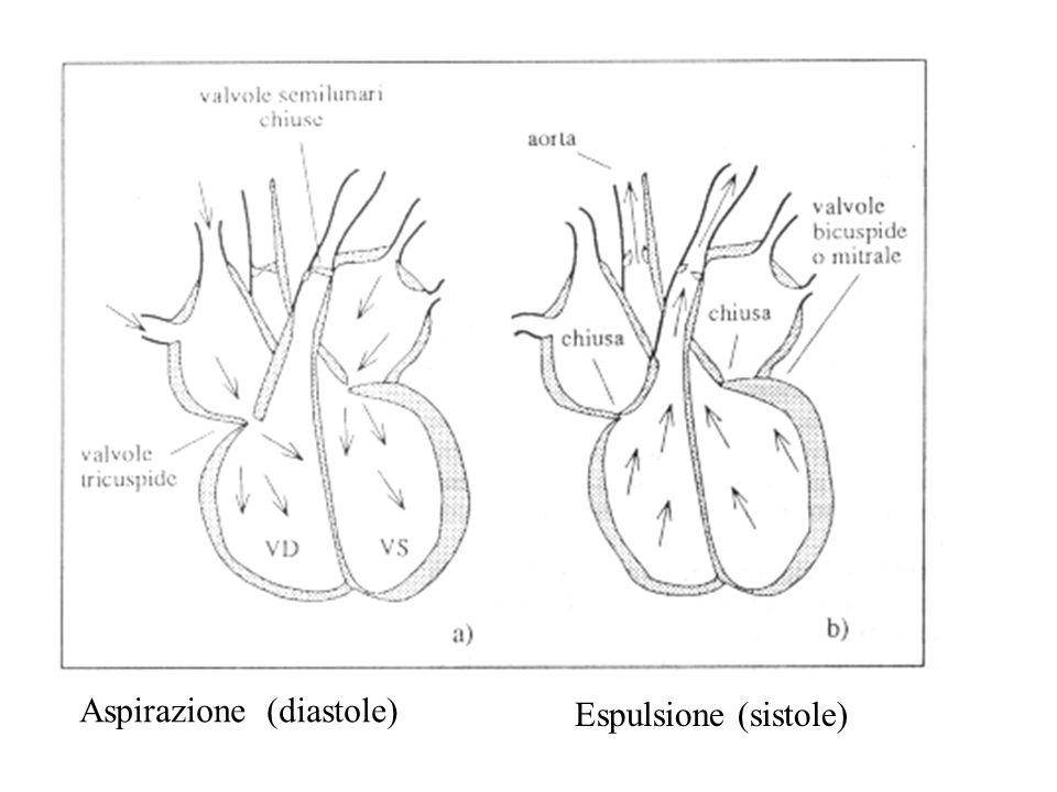 Aspirazione (diastole) Espulsione (sistole)