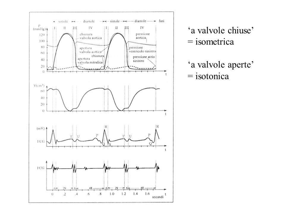 a valvole chiuse = isometrica a valvole aperte = isotonica