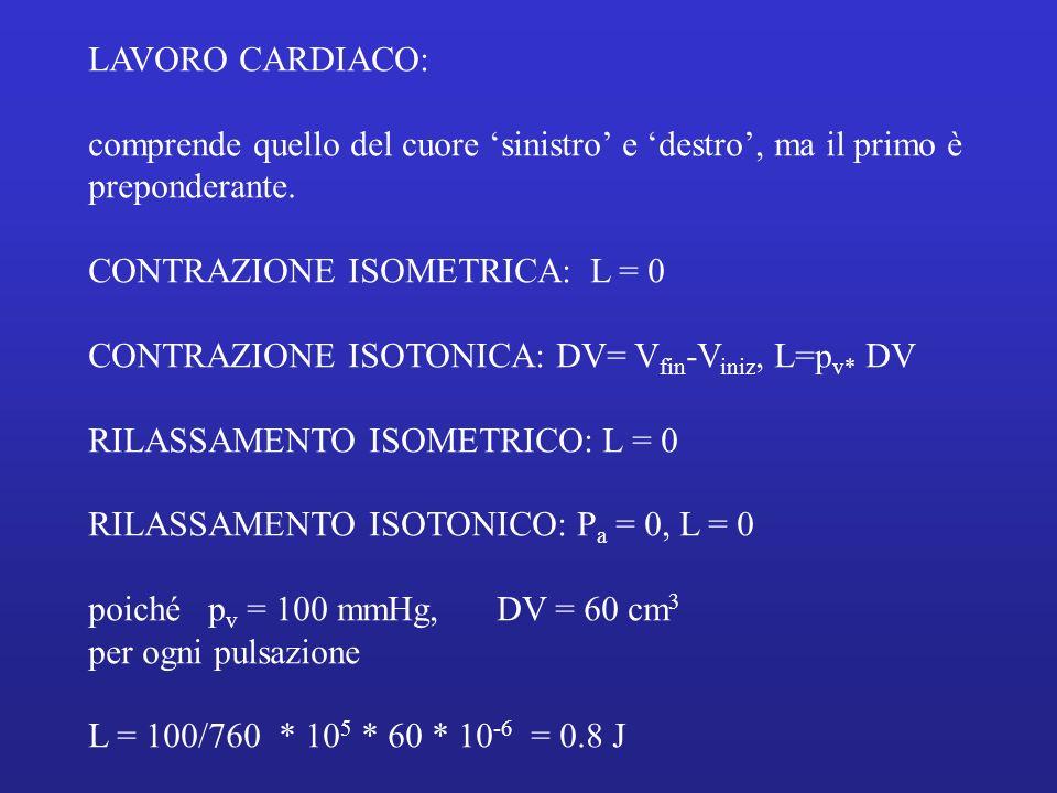LAVORO CARDIACO: comprende quello del cuore sinistro e destro, ma il primo è preponderante. CONTRAZIONE ISOMETRICA: L = 0 CONTRAZIONE ISOTONICA: DV= V