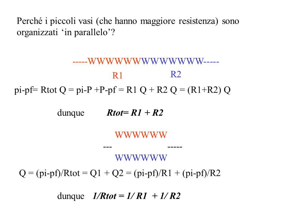 Perché i piccoli vasi (che hanno maggiore resistenza) sono organizzati in parallelo? -----WWWWWWWWWWWWW----- R1 R2 pi-pf= Rtot Q = pi-P +P-pf = R1 Q +
