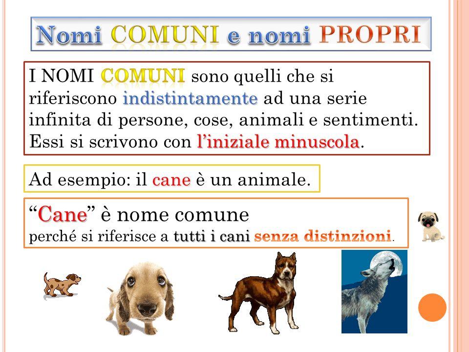 cane Ad esempio: il cane è un animale.