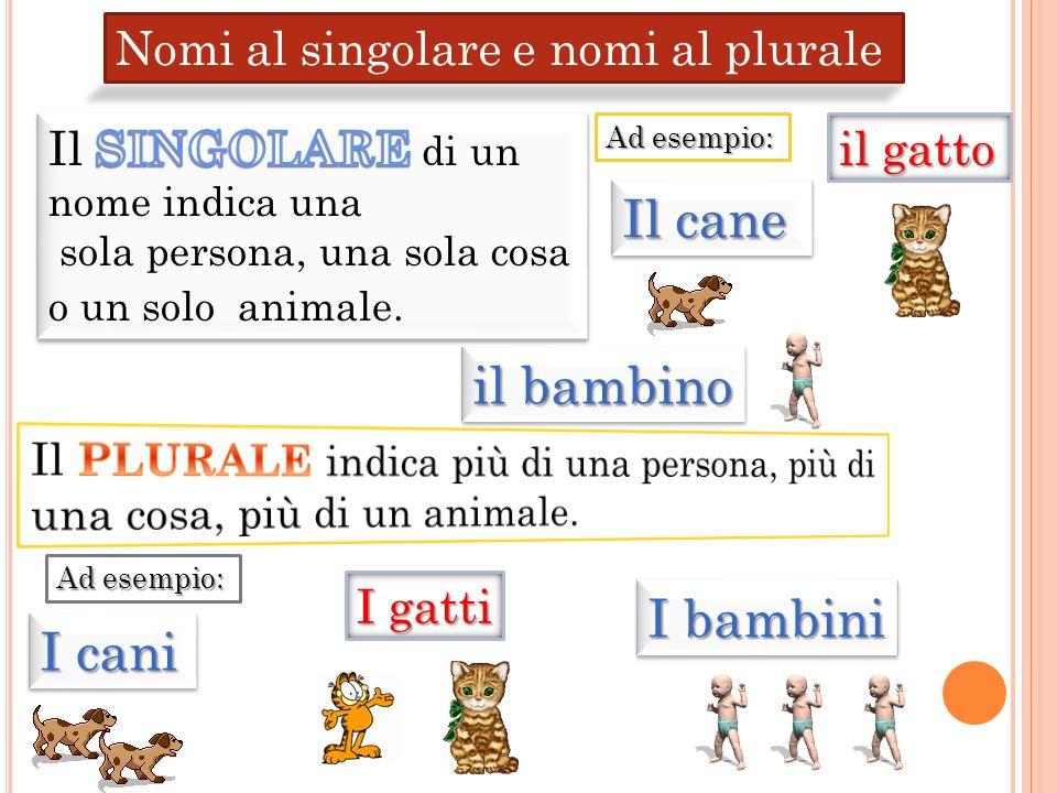 Nomi al singolare e nomi al plurale I bambini I cani I gatti Ad esempio: Il cane il gatto il bambino