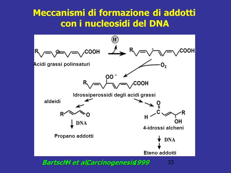 33 Meccanismi di formazione di addotti con i nucleosidi del DNA Bartsch H et al, Carcinogenesis 1999 aldeidi Acidi grassi polinsaturi Idrossiperossidi