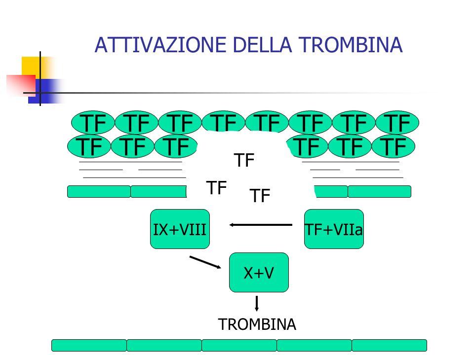 TF ATTIVAZIONE DELLA TROMBINA X+V IX+VIIITF+VIIa TROMBINA TF