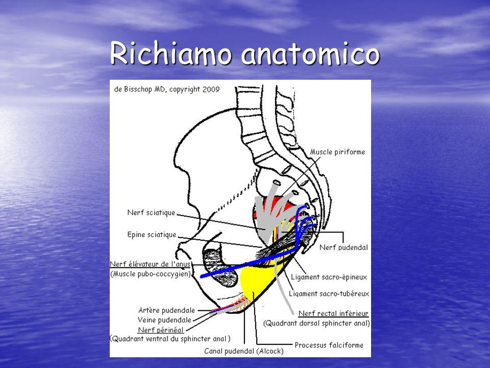 Richiamo anatomico
