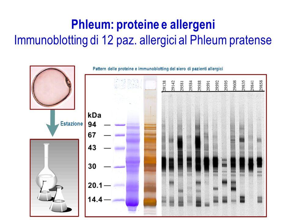 Phleum: proteine e allergeni Immunoblotting di 12 paz. allergici al Phleum pratense Estazione Pattern delle proteine e immunoblotting del siero di paz