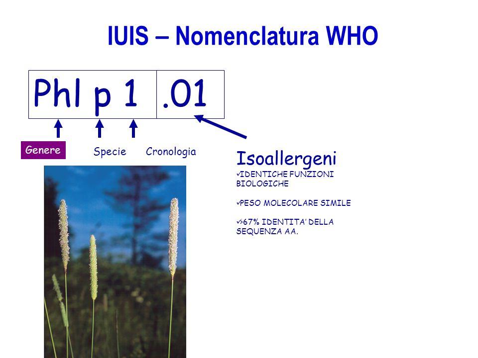Phl p 1 Genere SpecieCronologia Isoallergeni IDENTICHE FUNZIONI BIOLOGICHE PESO MOLECOLARE SIMILE >67% IDENTITA DELLA SEQUENZA AA..01 IUIS – Nomenclat