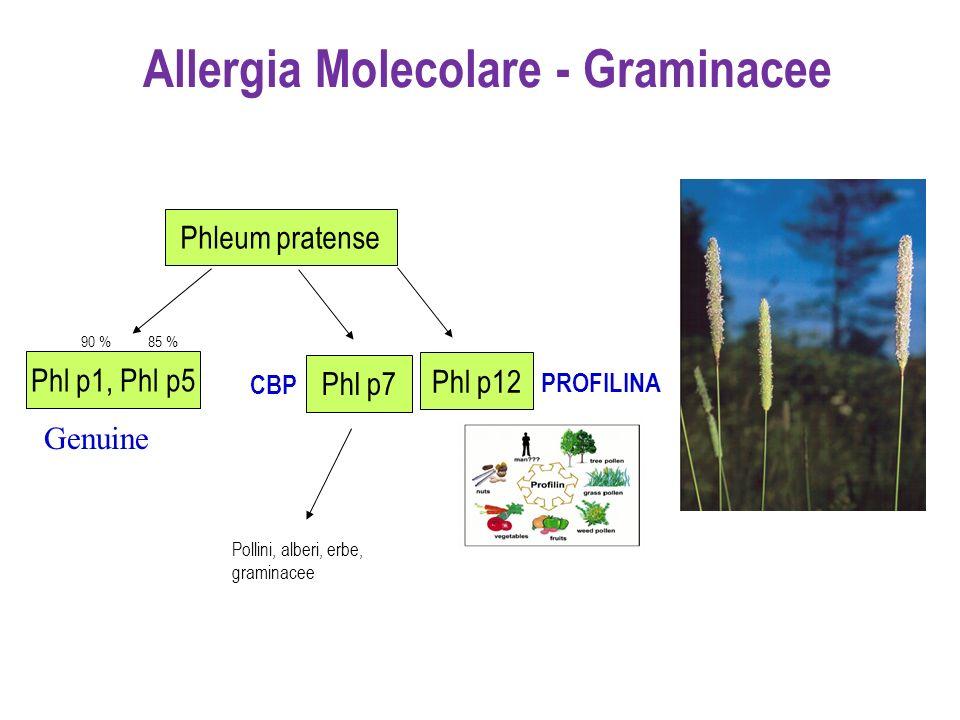 Phl p1, Phl p5 Phl p12 90 %85 % PROFILINA Pollini, alberi, erbe, graminacee CBP Phleum pratense Phl p7 Allergia Molecolare - Graminacee Genuine
