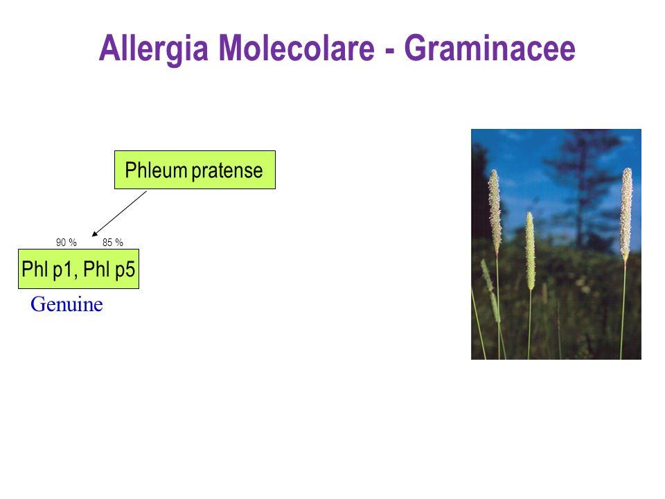 Phl p1, Phl p5 90 %85 % Phleum pratense Allergia Molecolare - Graminacee Genuine