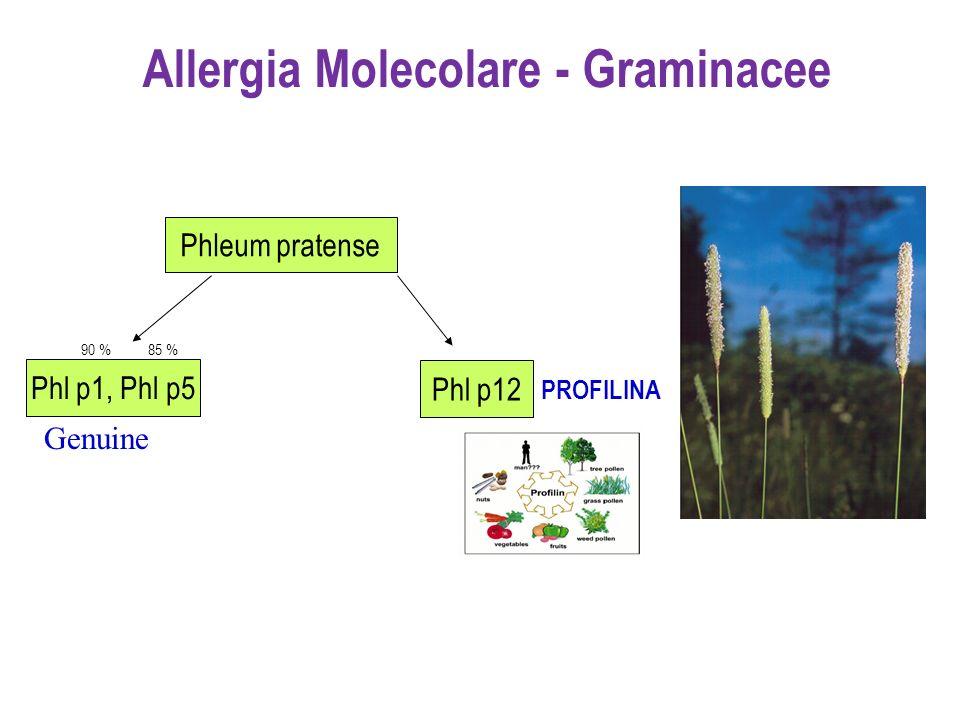Phl p1, Phl p5 Phl p12 90 %85 % PROFILINA Phleum pratense Allergia Molecolare - Graminacee Genuine