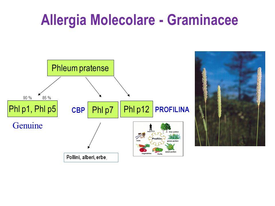 Phl p1, Phl p5 Phl p12 90 %85 % PROFILINA Pollini, alberi, erbe, CBP Phleum pratense Phl p7 Allergia Molecolare - Graminacee Genuine