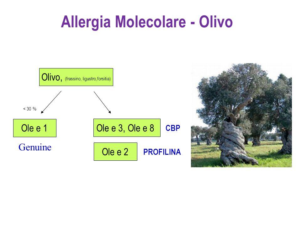 Allergia Molecolare - Olivo Olivo, (frassino, ligustro,forsitia) Ole e 3, Ole e 8 CBP Ole e 1 < 30 % Ole e 2 PROFILINA Genuine