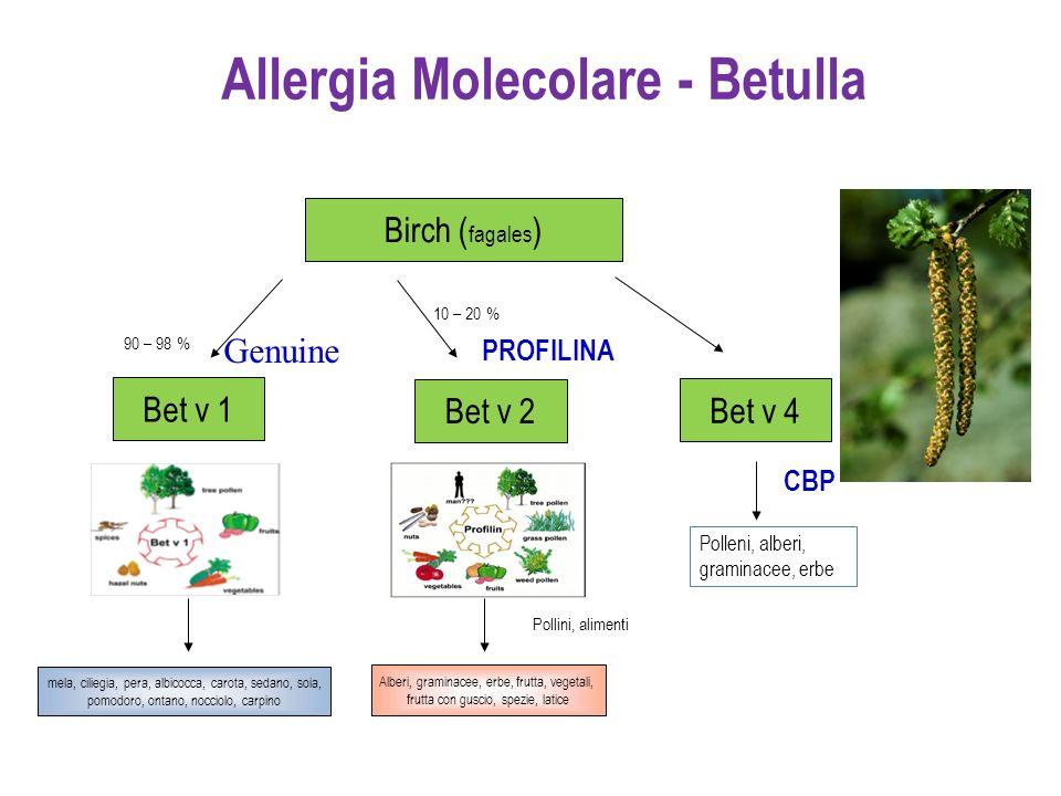 Allergia Molecolare - Betulla Bet v 1 Bet v 2 90 – 98 % 10 – 20 % PROFILINA Birch ( fagales ) Pollini, alimenti Bet v 4 Polleni, alberi, graminacee, e