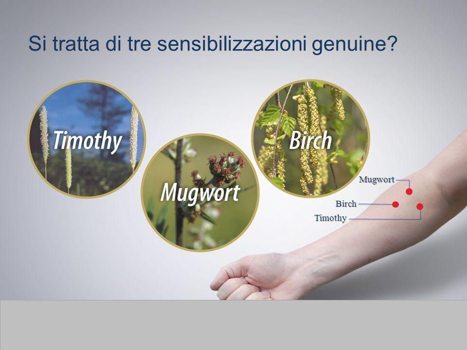 Si tratta di tre sensibilizzazioni genuine? Mugwort Birch Timothy