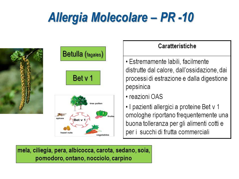Allergia Molecolare – PR -10 Betulla ( fagales ) Bet v 1 mela, ciliegia, pera, albicocca, carota, sedano, soia, pomodoro, ontano, nocciolo, carpino Ca