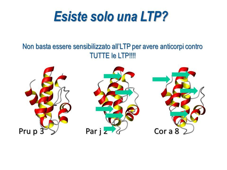 Pru p 3 Par j 2 Cor a 8 Non basta essere sensibilizzato allLTP per avere anticorpi contro TUTTE le LTP!!!! Esiste solo una LTP?