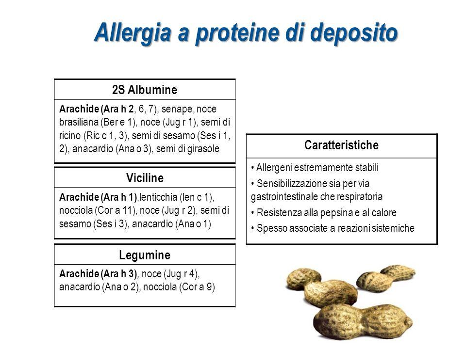 Allergia a proteine di deposito 2S Albumine Arachide (Ara h 2, 6, 7), senape, noce brasiliana (Ber e 1), noce (Jug r 1), semi di ricino (Ric c 1, 3),