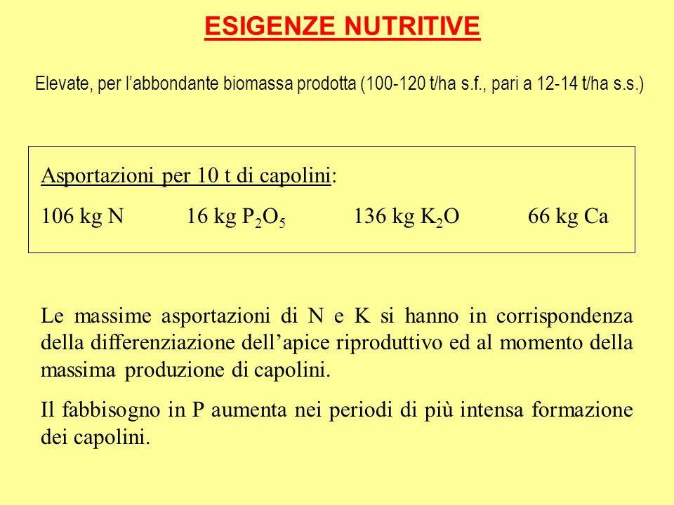 ESIGENZE NUTRITIVE Asportazioni per 10 t di capolini: 106 kg N 16 kg P 2 O 5 136 kg K 2 O 66 kg Ca Le massime asportazioni di N e K si hanno in corris