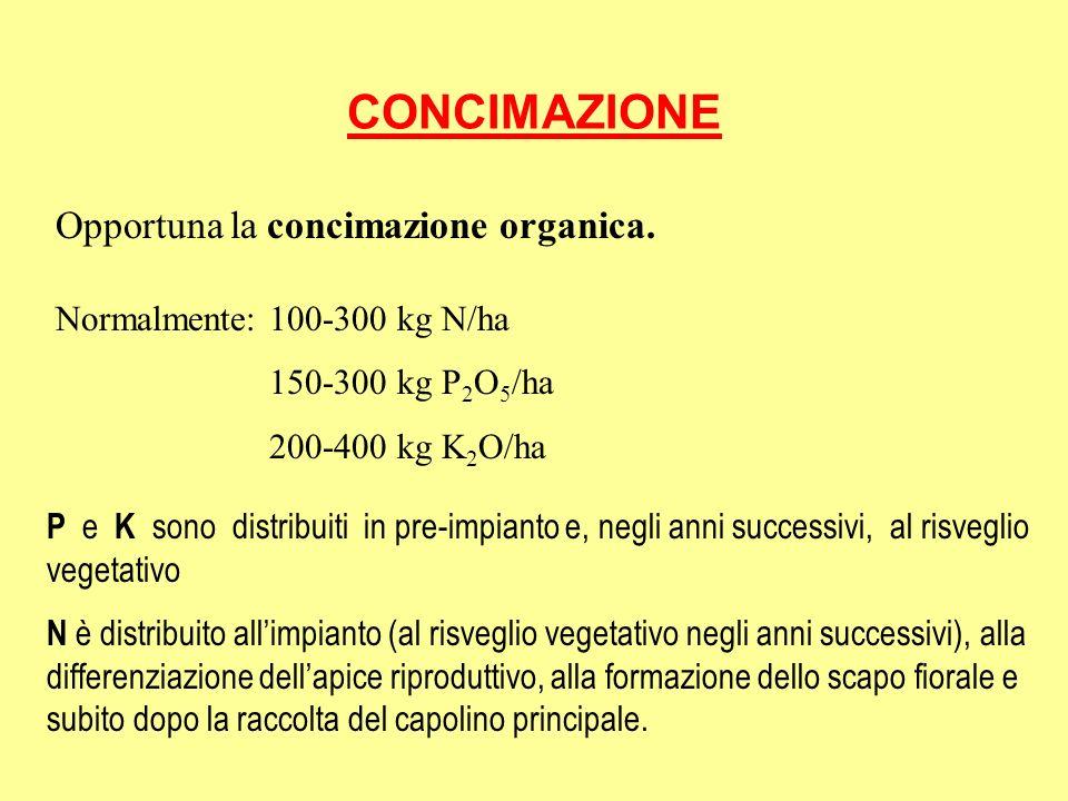 CONCIMAZIONE Opportuna la concimazione organica. Normalmente: 100-300 kg N/ha 150-300 kg P 2 O 5 /ha 200-400 kg K 2 O/ha P e K sono distribuiti in pre