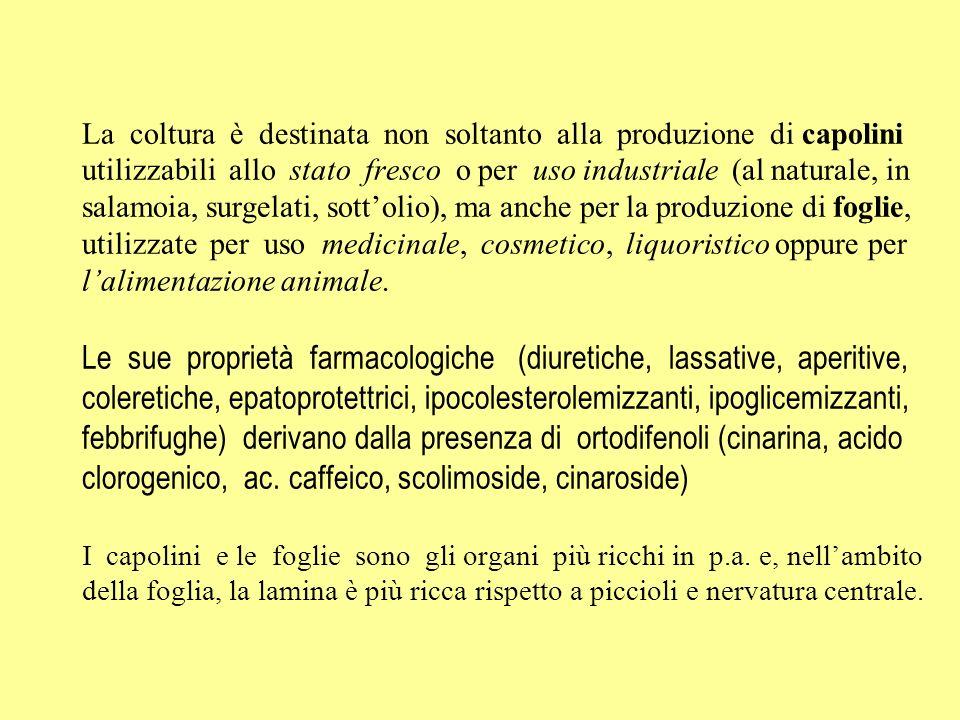 La coltura è destinata non soltanto alla produzione di capolini utilizzabili allo stato fresco o per uso industriale (al naturale, in salamoia, surgel