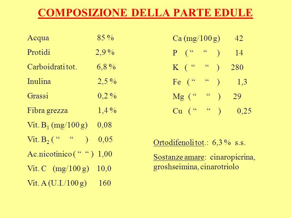 COMPOSIZIONE DELLA PARTE EDULE Acqua 85 % Protidi 2,9 % Carboidrati tot. 6,8 % Inulina 2,5 % Grassi 0,2 % Fibra grezza 1,4 % Vit. B 1 (mg/100 g) 0,08