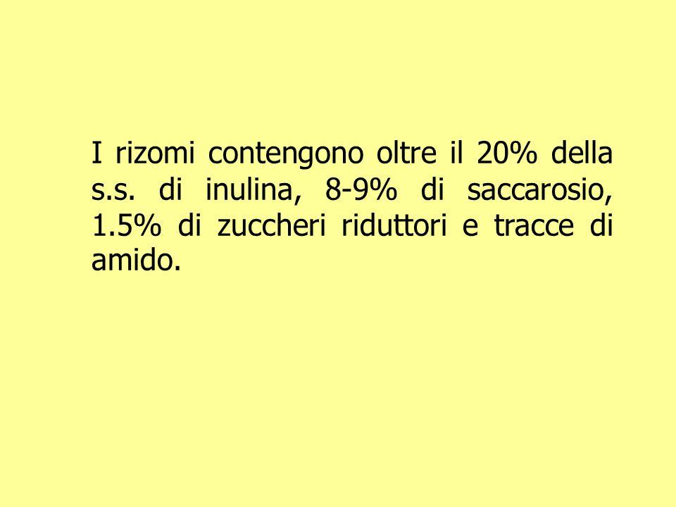I rizomi contengono oltre il 20% della s.s. di inulina, 8-9% di saccarosio, 1.5% di zuccheri riduttori e tracce di amido.