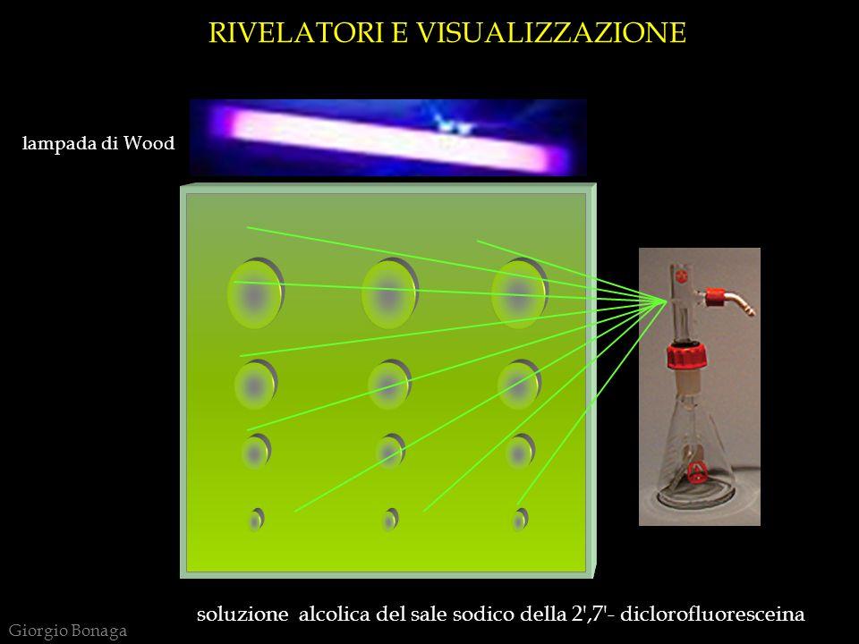 RIVELATORI E VISUALIZZAZIONE lampada di Wood soluzione alcolica del sale sodico della 2 ,7 - diclorofluoresceina Giorgio Bonaga