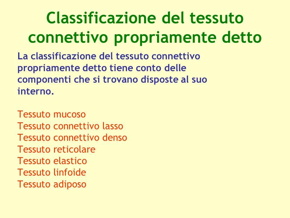 Classificazione del tessuto connettivo propriamente detto La classificazione del tessuto connettivo propriamente detto tiene conto delle componenti ch