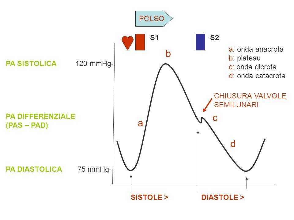 120 mmHg- 75 mmHg- PA SISTOLICA PA DIFFERENZIALE (PAS – PAD) PA DIASTOLICA CHIUSURA VALVOLE SEMILUNARI SISTOLE > DIASTOLE > a b c d a: onda anacrota b