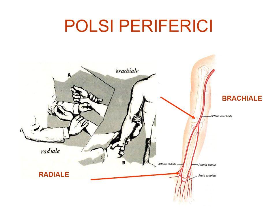 CARATTERI DEL POLSO FORZA: Intensità impressa dallonda sfigmica sul dito che palpa > gittata sistolica e pervietà aortica FORTE DEBOLE SINCRONIA: Contemporaneità dellonda sfigmica in polsi simmetrici e latenza del polso rispetto alla sistole cardiaca > Ostruzione arteriosa intrinseca o estrinseca > Coartazione aorta > Aneurismi aortici