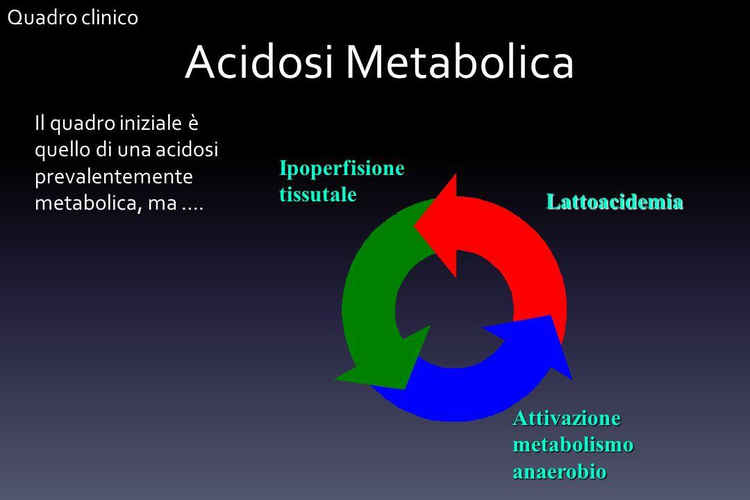 Acidosi Metabolica Il quadro iniziale è quello di una acidosi prevalentemente metabolica, ma …. Ipoperfisione tissutale Attivazione metabolismo anaero