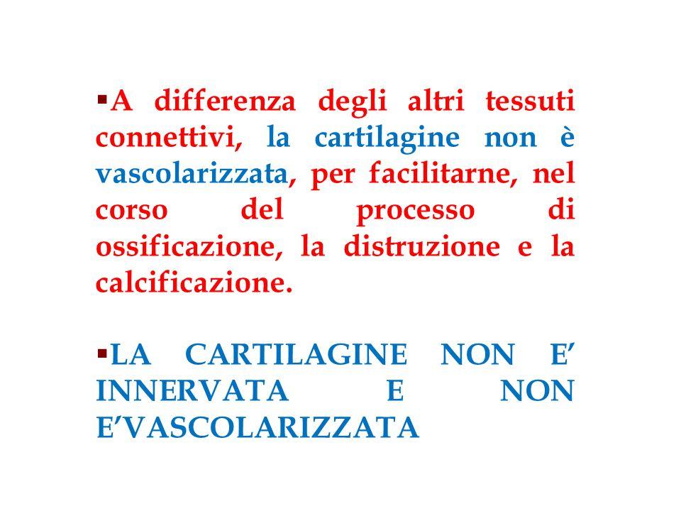 A differenza degli altri tessuti connettivi, la cartilagine non è vascolarizzata, per facilitarne, nel corso del processo di ossificazione, la distruz