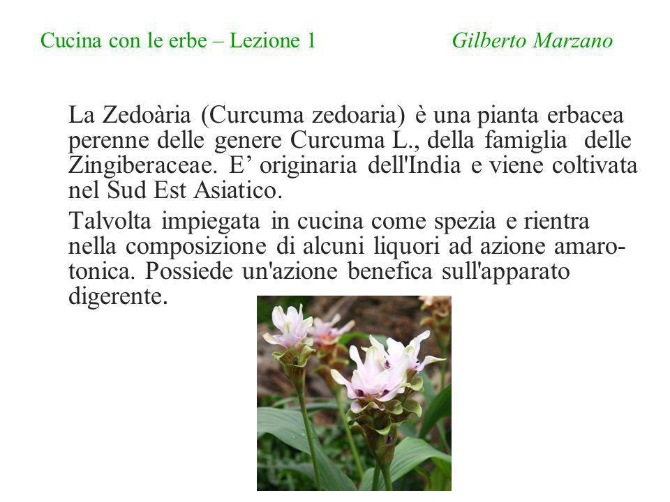 Cucina con le erbe – Lezione 1 Gilberto Marzano La Zedoària (Curcuma zedoaria) è una pianta erbacea perenne delle genere Curcuma L., della famiglia delle Zingiberaceae.