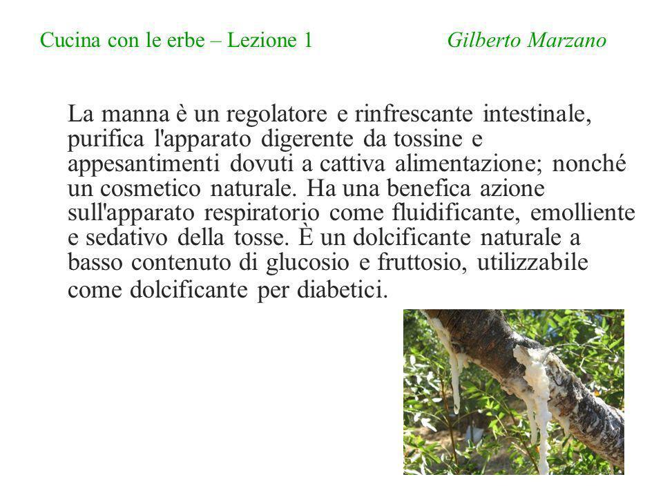 Cucina con le erbe – Lezione 1 Gilberto Marzano La manna è un regolatore e rinfrescante intestinale, purifica l apparato digerente da tossine e appesantimenti dovuti a cattiva alimentazione; nonché un cosmetico naturale.