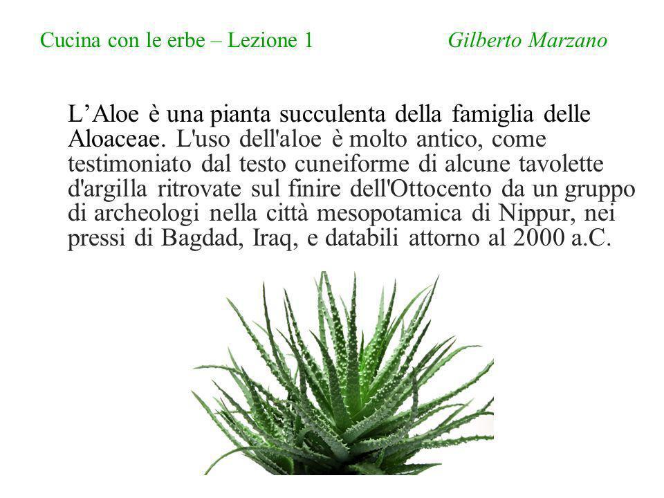Cucina con le erbe – Lezione 1 Gilberto Marzano LAloe è una pianta succulenta della famiglia delle Aloaceae.