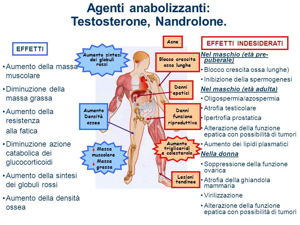 Aumento della massa muscolare Diminuzione della massa grassa Aumento della resistenza alla fatica Diminuzione azione catabolica dei glucocorticoidi Au